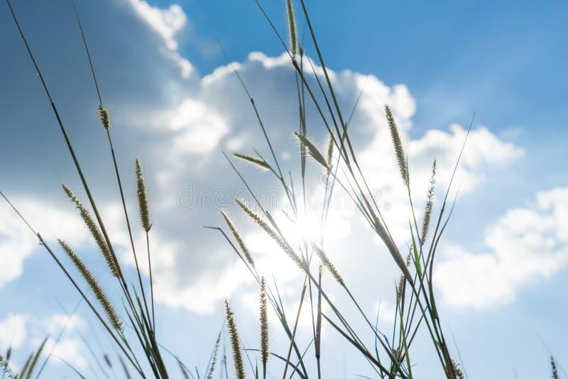 Lemat trawa który światło błyszczy behind z jaskrawym błękitem sk słońce zdjęcie stock