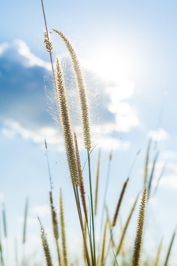 Lemat trawa który światło błyszczy behind z jaskrawym błękitem sk słońce obrazy royalty free