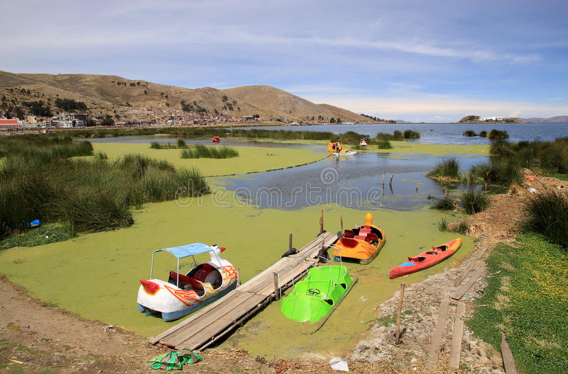Lemma nella costa inquinante del Titicaca, Puno, Perù, Sudamerica fotografia stock