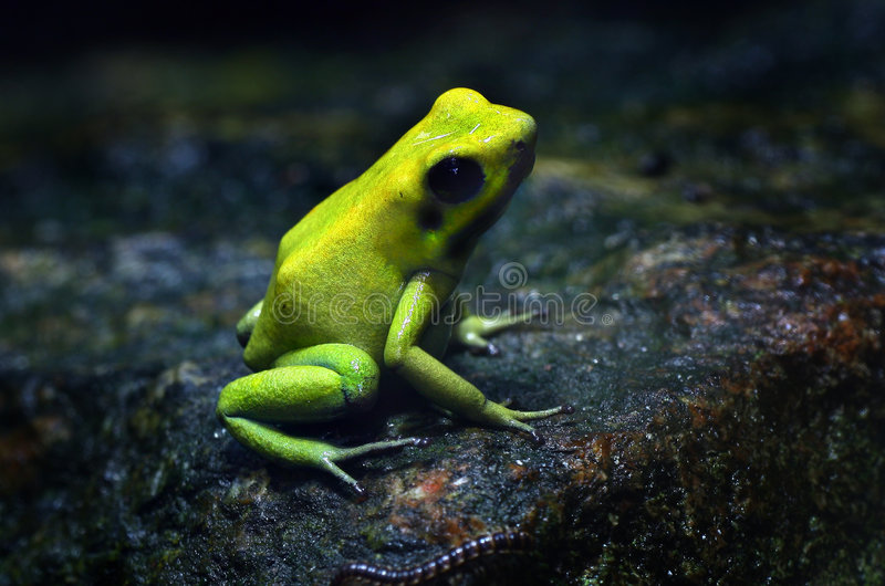 Lemon. Photograph of frog and worm royalty free stock photo