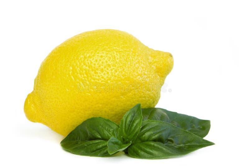 Lemon royalty free stock images