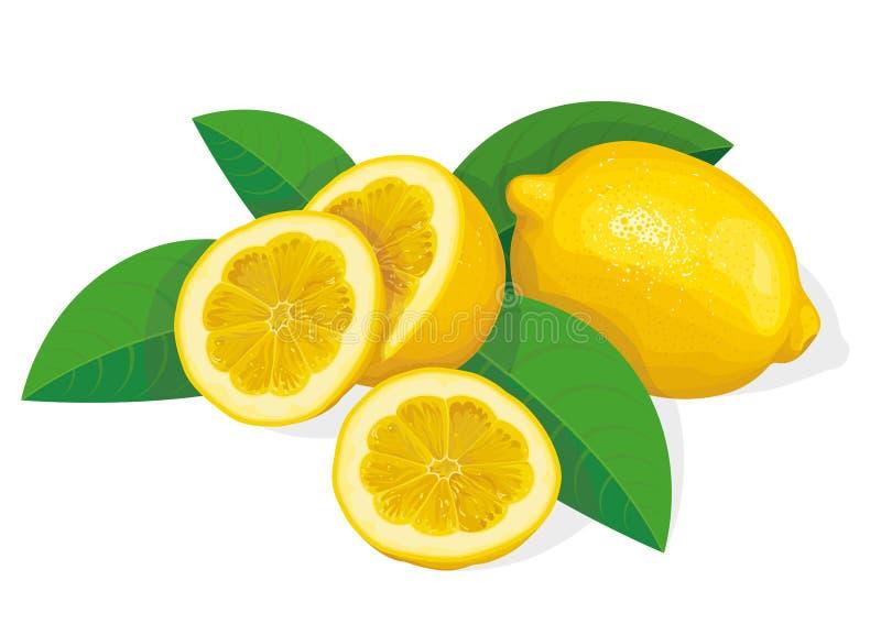Lemon. Fresh aromatic lemon, vector illustration royalty free illustration