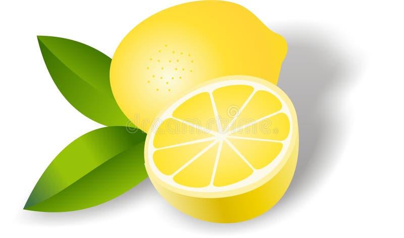 Lemon. Vector illustration of fresh lemon