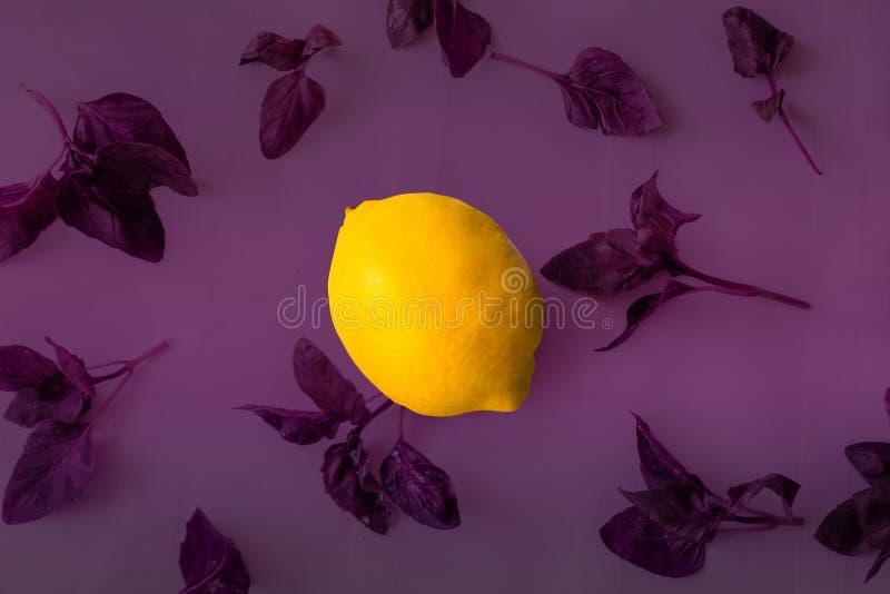 Lemon and basil background. Bright yellow lemon on a purple background of Basil leaves vector illustration