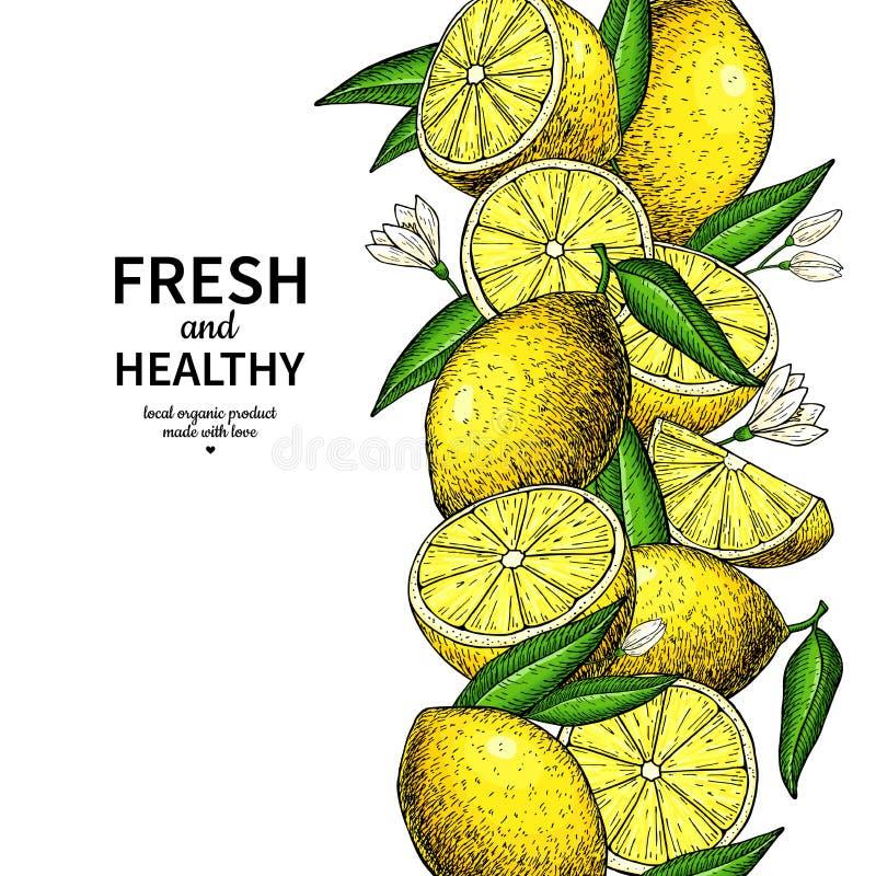 Lemon border vector drawing. Citrus fruit frame template. Hand drawn summer illustration. Label, packaging design concept. Great for tea, juice, natural vector illustration