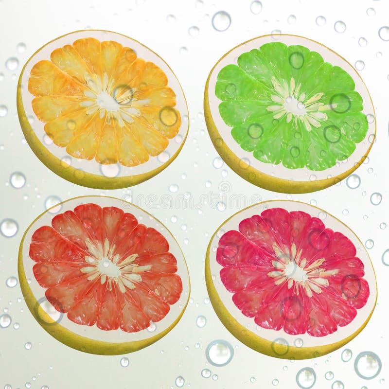 Download Lemon fresh stock image. Image of fruit, orange, lemon - 31868193