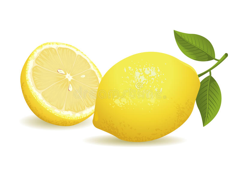 Lemon Fruit. Realistic vector illustration of a lemon and a sliced lemon