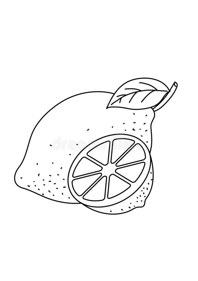 Lemon Fruit Black And White Lineart Drawing Illustration Stock Illustration Illustration Of Sketch Draw 174997006