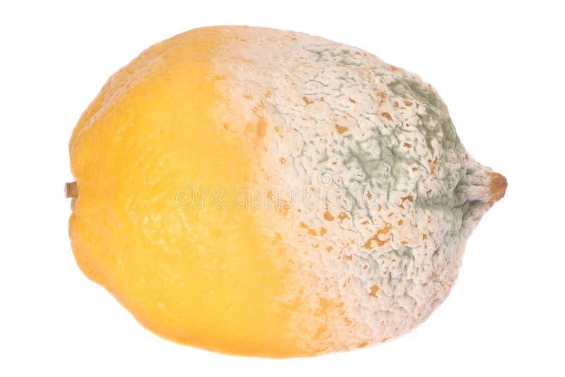 Lemon fruit half-damaged stock image