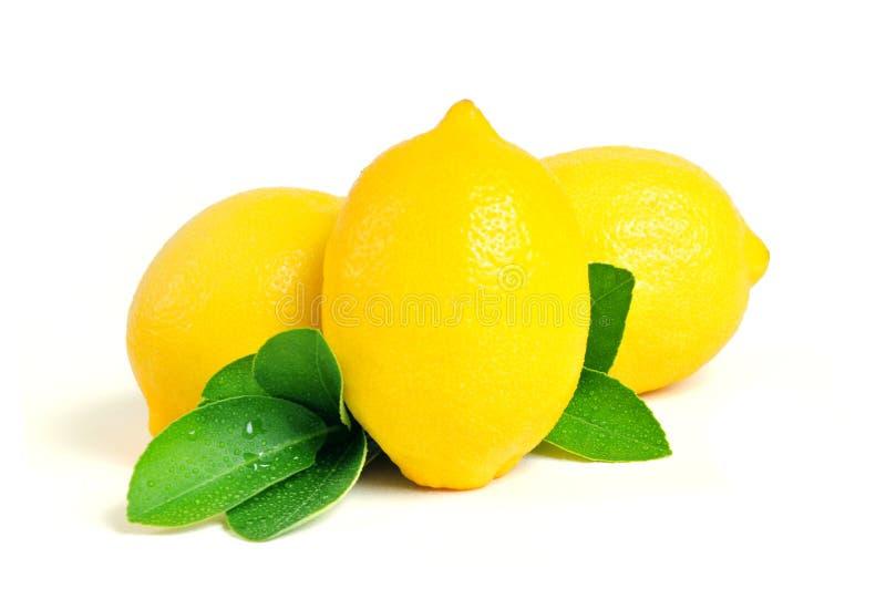 Fresh Lemon fruit and leaf  on white background stock images
