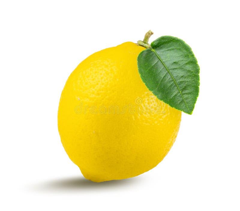 Lemon fruit with leaf isolated on white background royalty free stock image