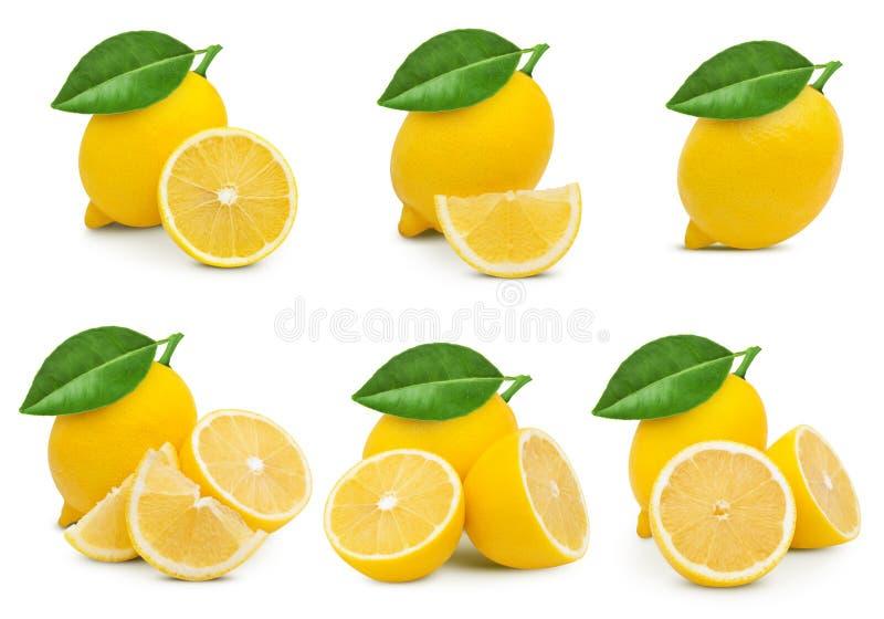 Lemon fruit leaf royalty free stock image