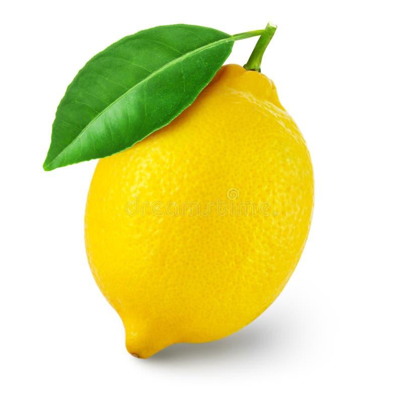 Lemon fruit with leaf stock photo