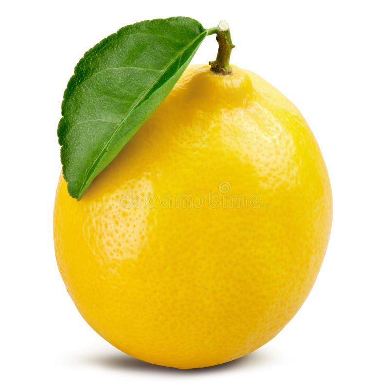 Lemon fruit leaf royalty free stock photos