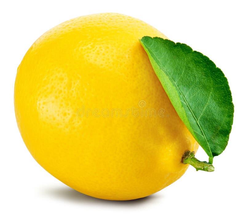 Lemon fruit leaf stock photography