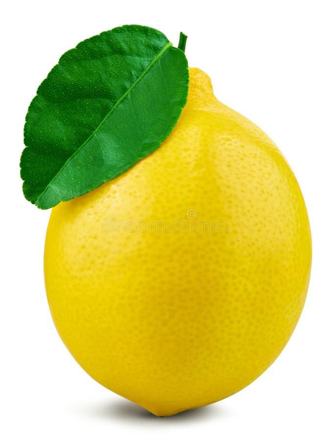 Lemon fruit leaf. Lemon fruit with leaf isolated on white background leaf Clipping Path stock photos