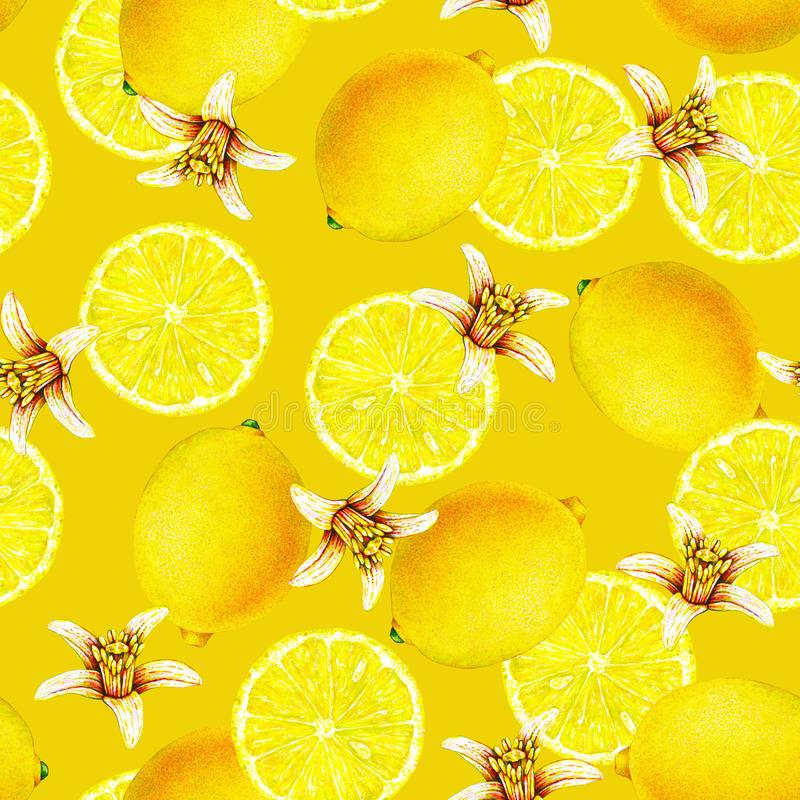 Lemon fruits with flowers isolated on yellow background. Watercolor drawing seamless pattern for design. royalty free stock images