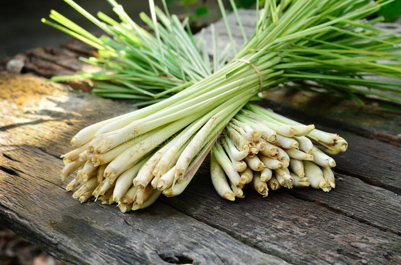 Download Lemon Grass stock image. Image of cooking, culinary, root - 25843867
