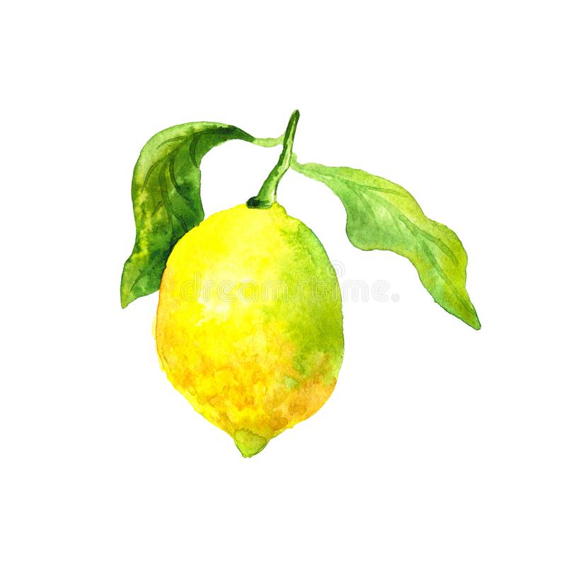 Lemon with green leaf. Bright yellow fruit. Botanical element for design. Hand drawn watercolor illustration. Isolated on white stock illustration