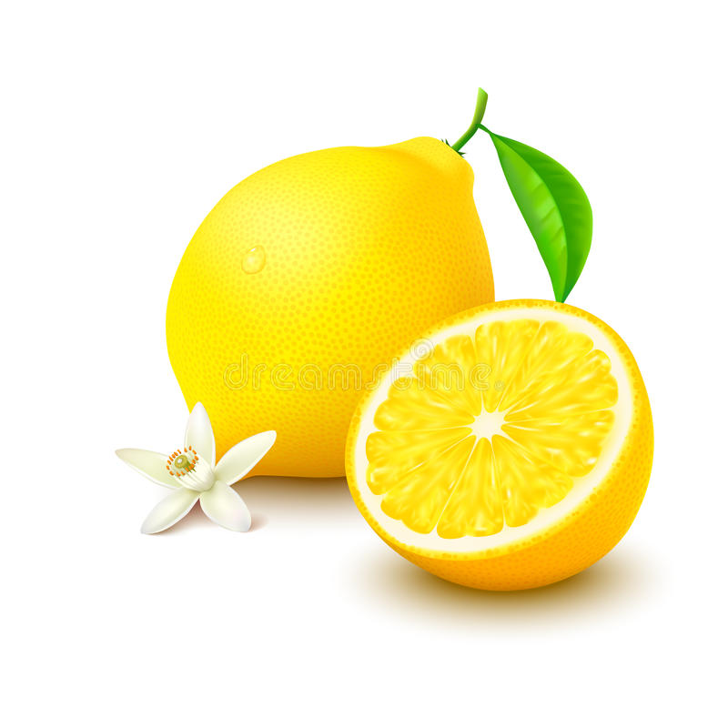 Lemon with half and flower on white background. Whole lemon with leaf, slice and flower on white background. Vector illustration stock illustration