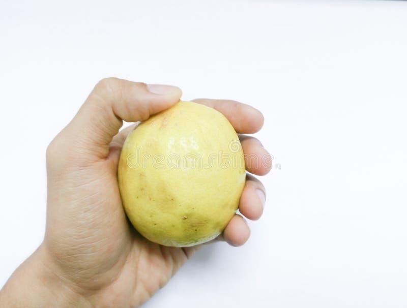 Lemon on hand royalty free stock image