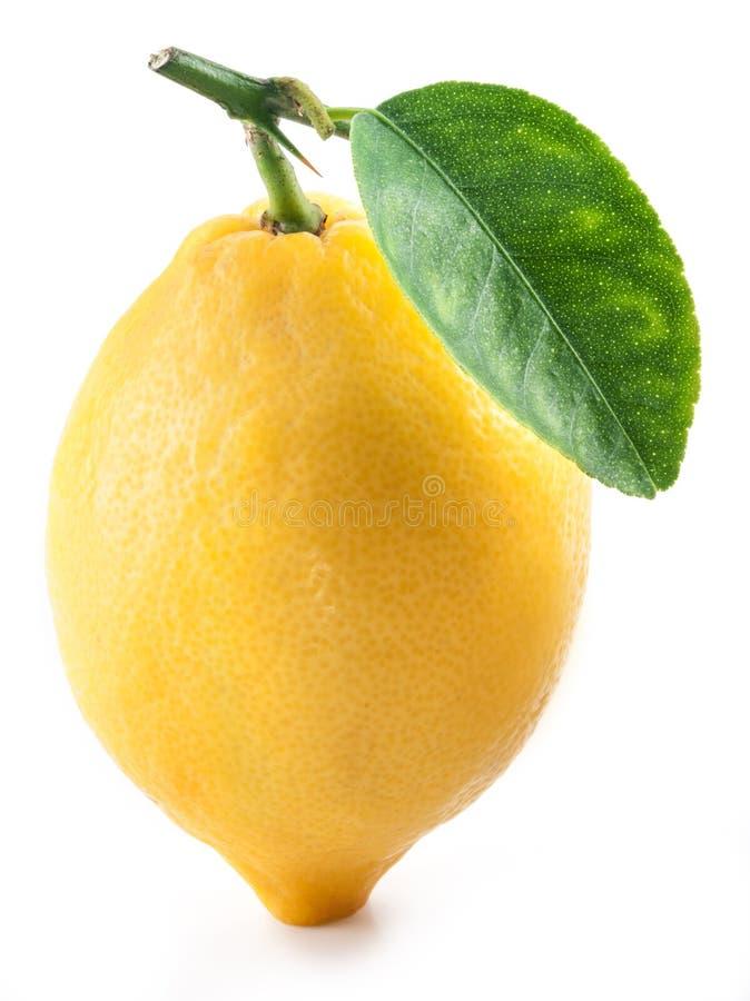 Lemon with leaf. stock image