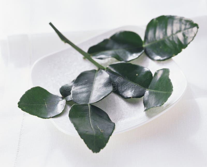 Lemon leaves. In a white bowl stock image