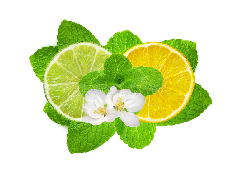 Lemon and lime slices on fresh mint isolated on white royalty free stock photos