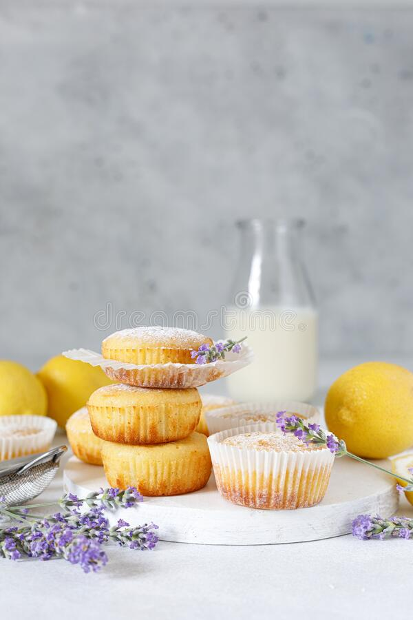 Lemon muffins with sugar powder stock photo