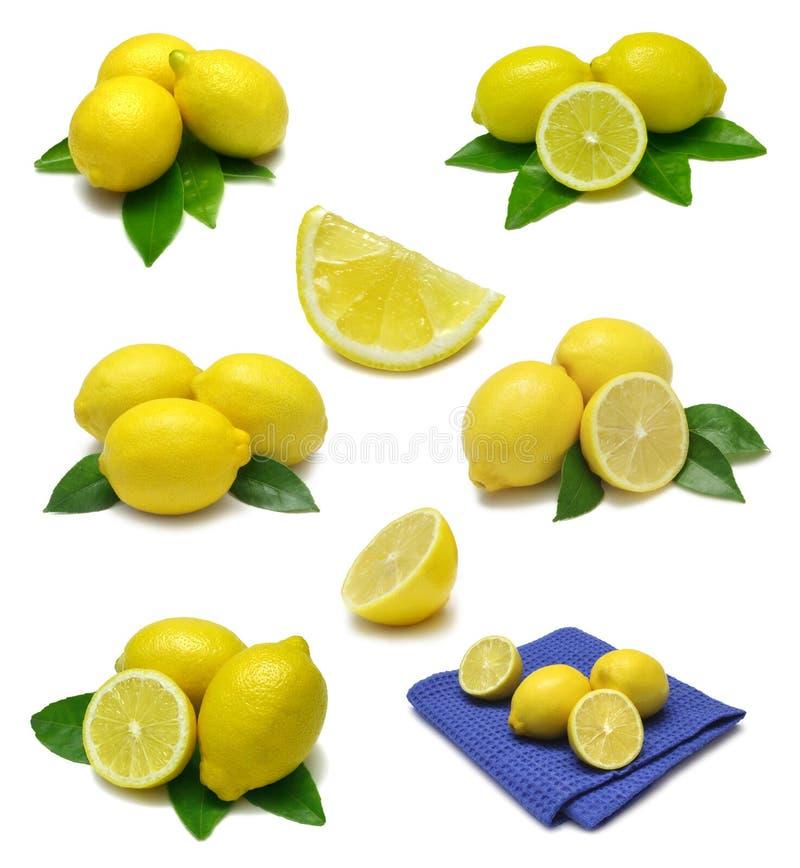 Lemon Sampler royalty free stock image