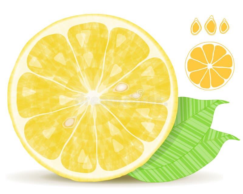Download Lemon Slice stock vector. Illustration of natural, seasonal - 22459794