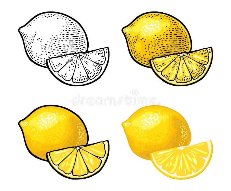 Lemon Slice and whole. Vector color vintage engraving and flat royalty free illustration