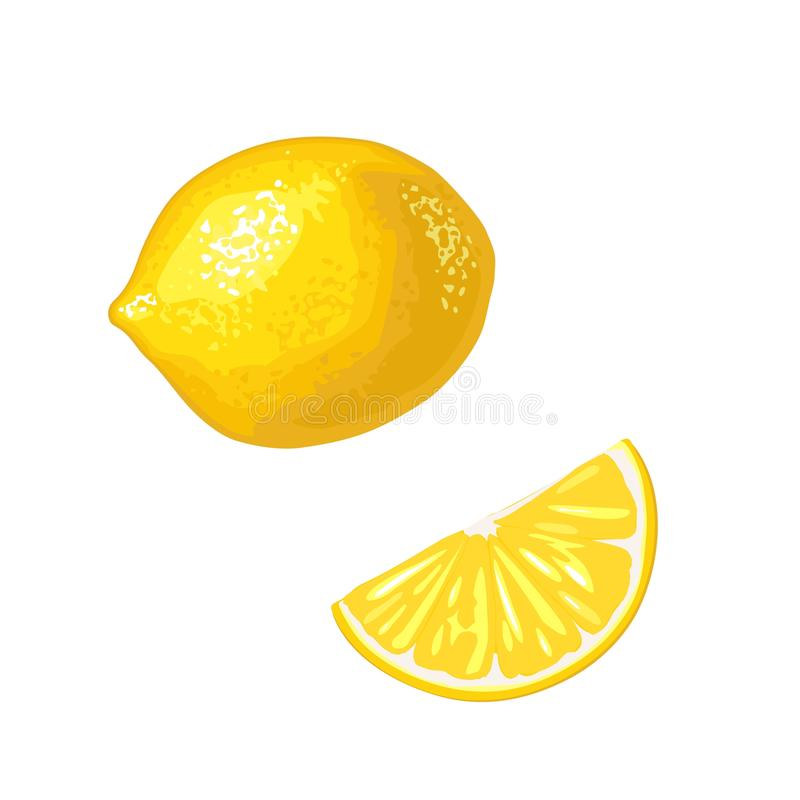 Lemon Slice and whole. Vector color flat engraving vector illustration