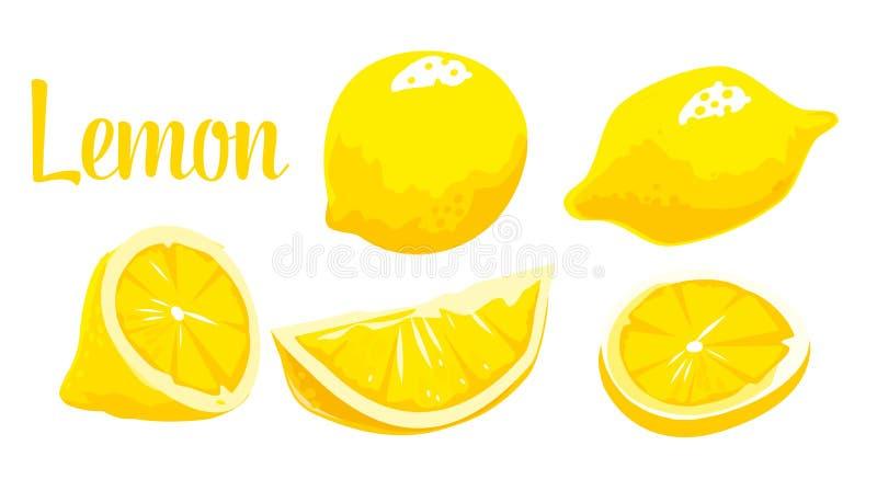 Lemon Slice and whole. Vector color vintage engraving vector illustration