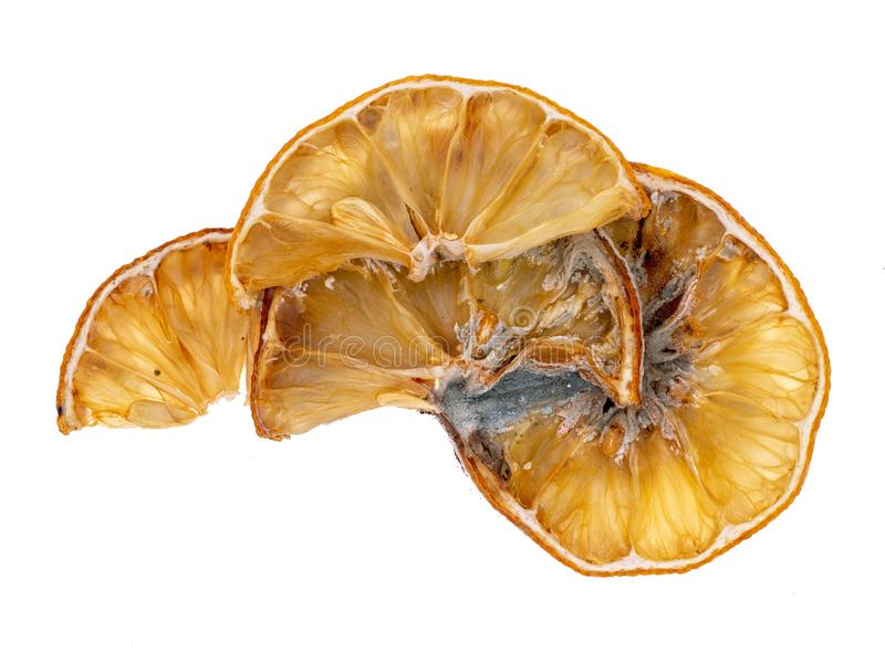 Lemon slices gone mouldy with mold. Beautiful natural decomposition. Isolated on a white background stock photography