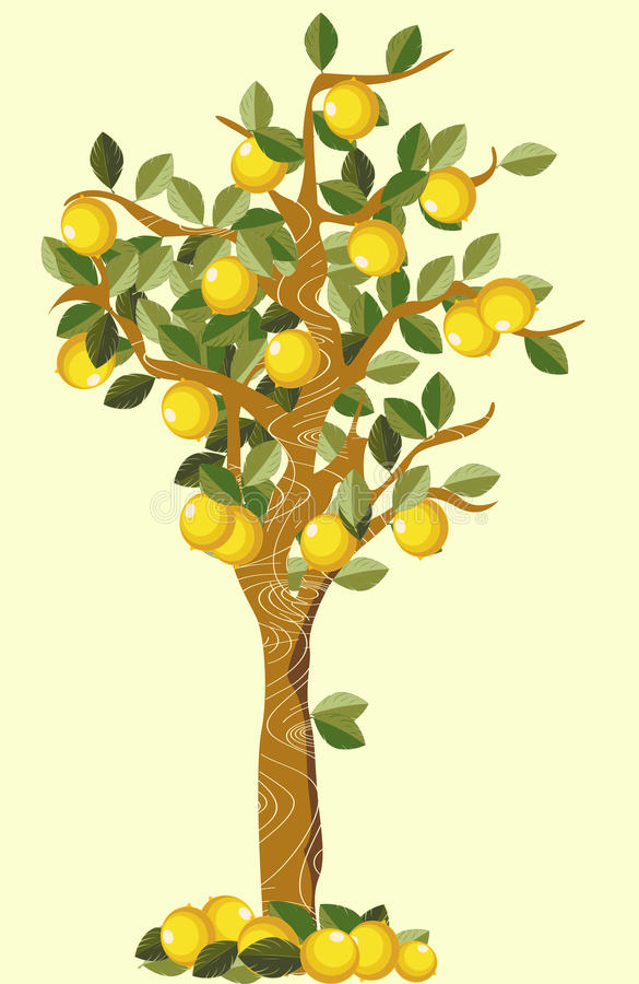 Download Lemon tree stock vector. Image of sketch, fruit, drawing - 17129245