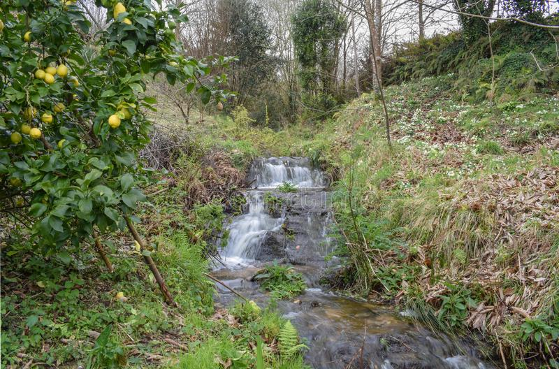 Small river in waterfall and lemon tree royalty free stock photos