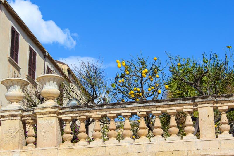Lemon tree with ripe lemons on historical balcony adjacent to Santa Lucia Church on Piazza Duomo Square in Ortigia Island,. Syracuse, Sicily, Italy. Sunny day stock photos