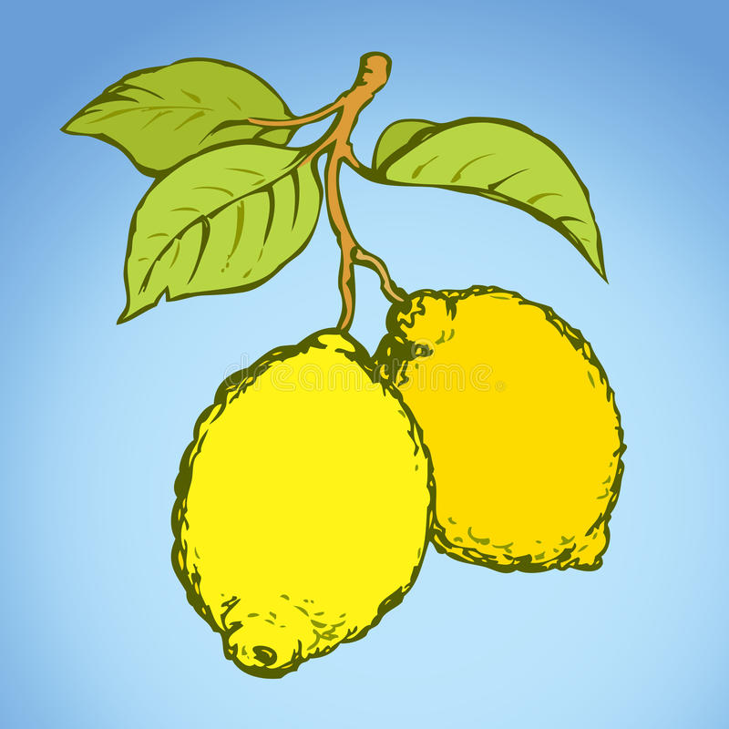 Lemon. Vector drawing. Tasty ripe raw fresh sappy lime fruitful on tree sprig isolated on white backdrop. Freehand bright colorful cartoon hand drawn picture royalty free illustration