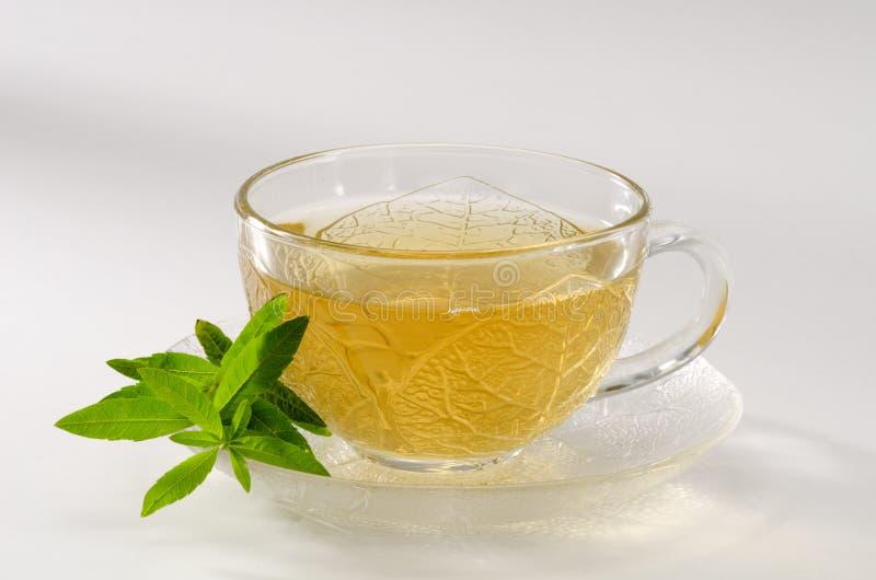 Lemon verbena herbal tea royalty free stock images