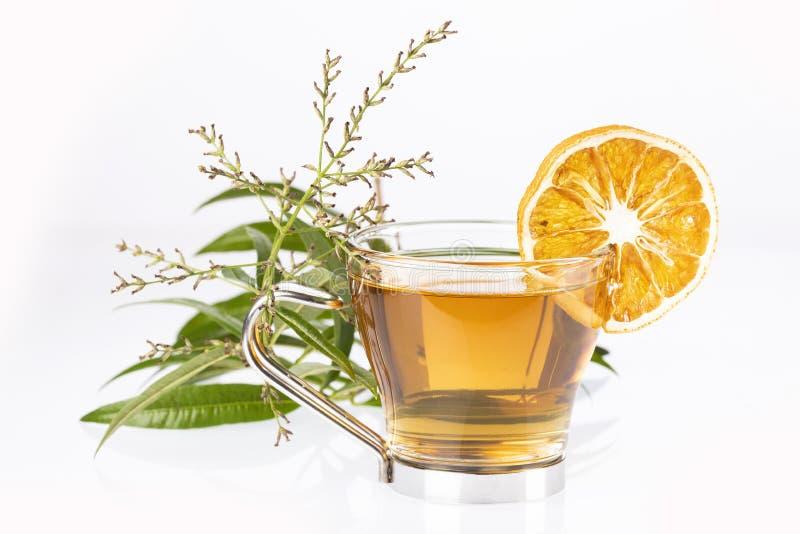 Lemon verbena leaves and verbena tea. Aloysia citrodora. Text space stock photo