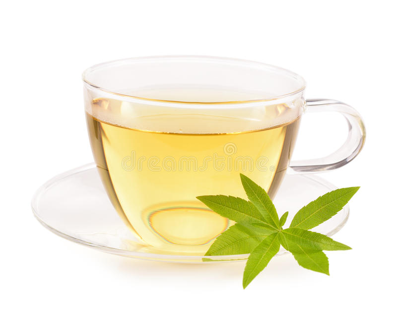 Lemon verbena tea and leaves isolated. stock image