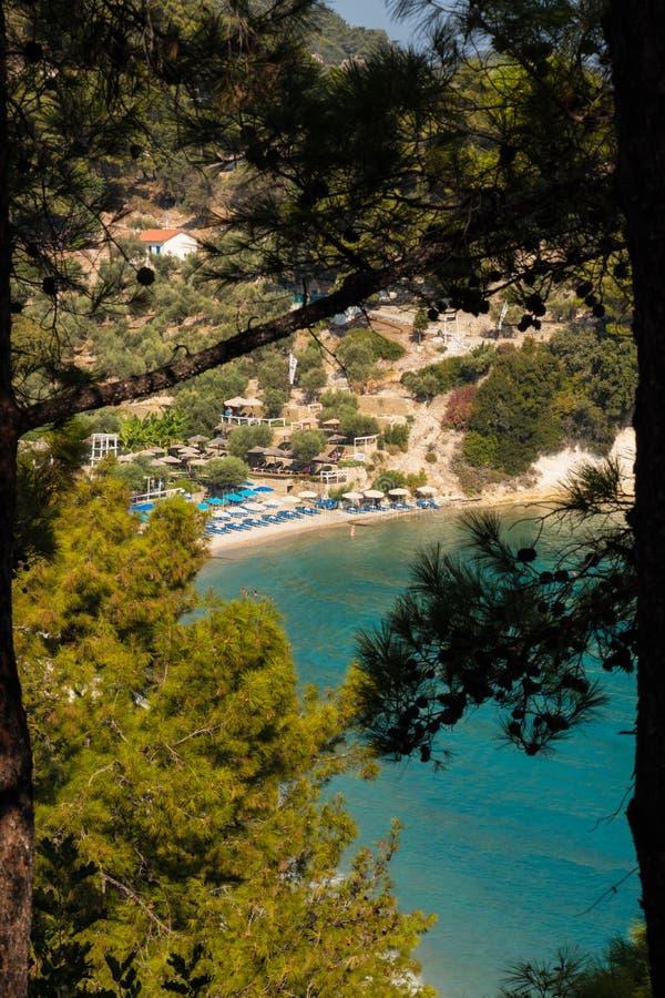 Lemonakia-Strand-Wurfsbäume lizenzfreies stockbild