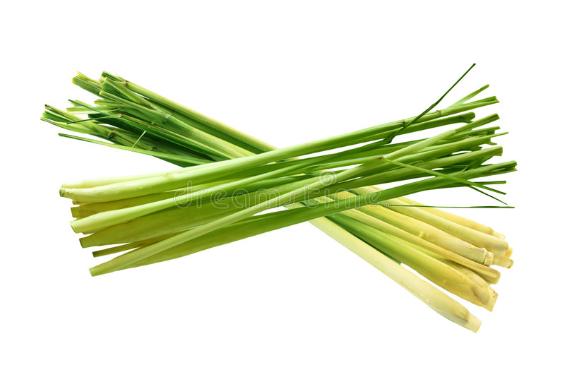 Lemongrass royaltyfri fotografi