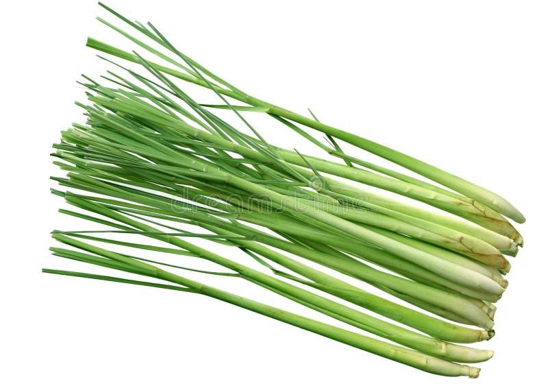 lemongrass arkivbild