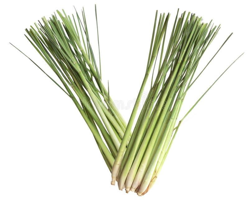 lemongrass obraz stock