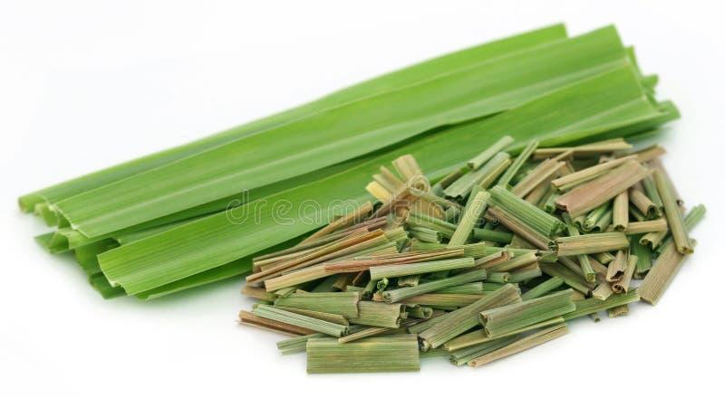 lemongrass стоковое изображение rf