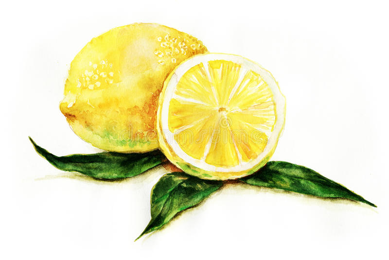 Lemons. Two lemons, one cut, white background. Watercolor art