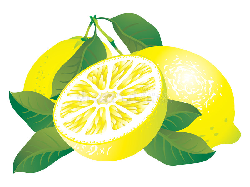 Lemons. Raster version of vector image of lemons There is in addition a vector format (EPS 8