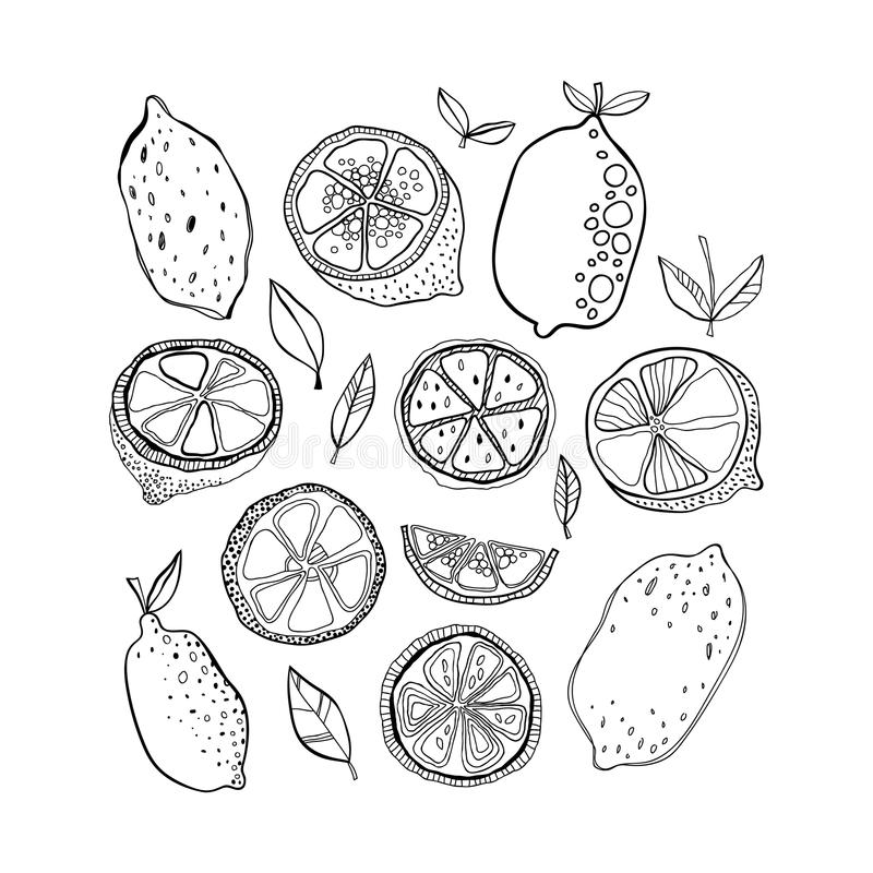Lemons Black And White Citrus Fruits For Coloring Pages
